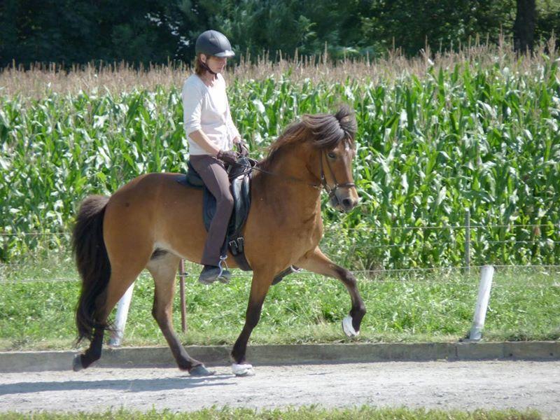 Nächste Haltestelle: Das geschmeidige Pferd!